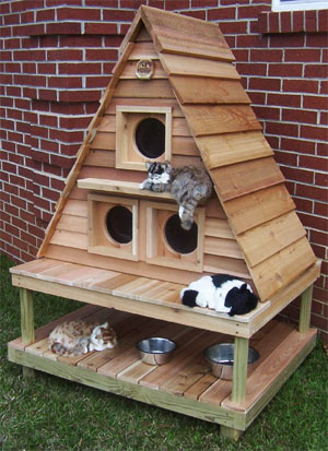 why does my cat need his own house even outdoor cats crave a little ...