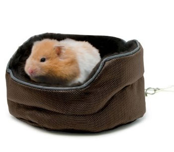 Give Your Hamster A Great Nights Sleep Give Him His Own