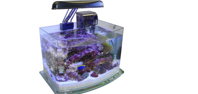 curved-glass-tank