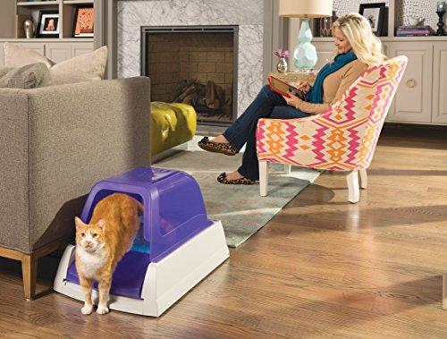 neutering cats costs