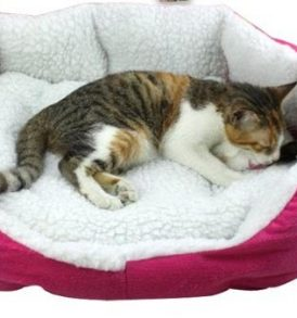 Double Decker Dog Bed For Sale