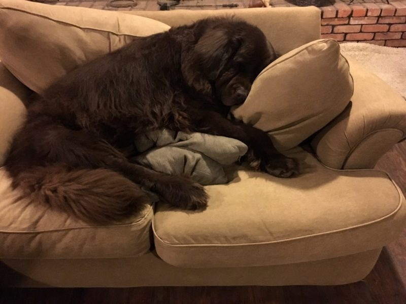 lazy-dogs-sofas9