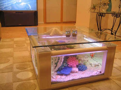 68 gallon square coffee table aquarium fish ready with for Fish aquarium coffee table