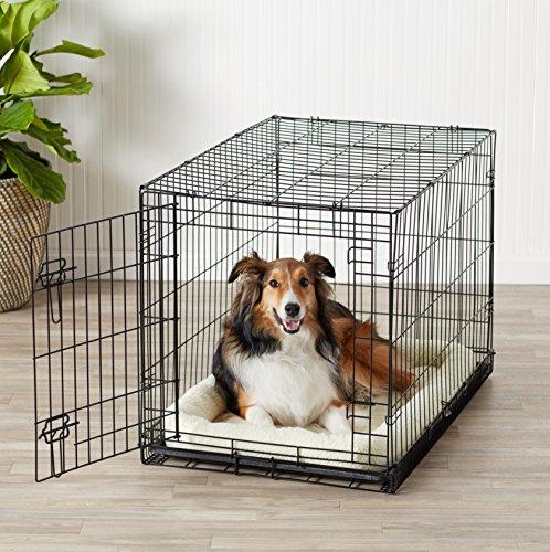 Amazonbasics Single Door Folding Metal Dog Crate Medium