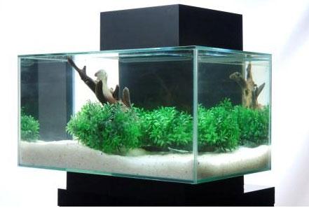 Make This Edgeless Aquarium The Center Of Conversation In