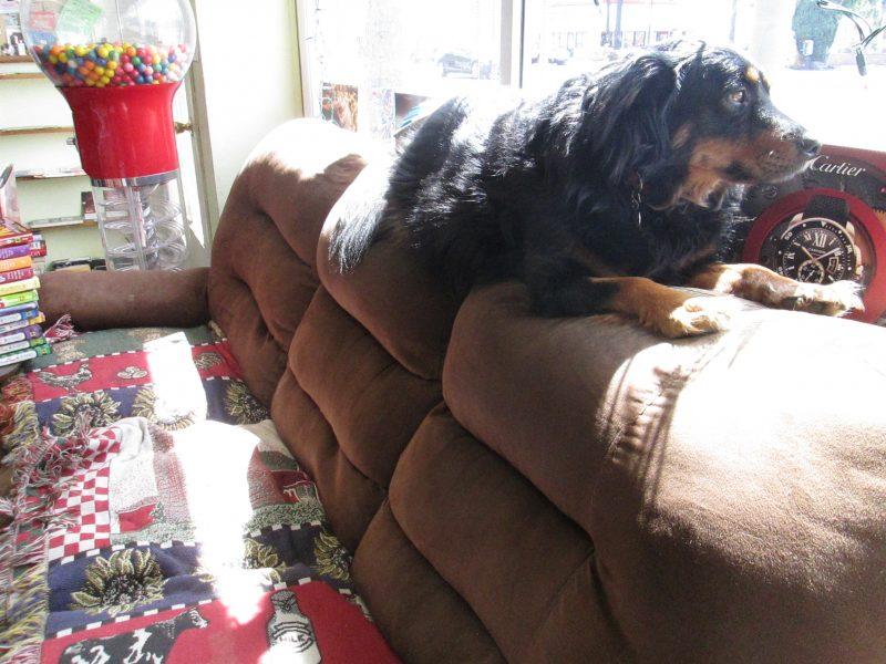 lazy-dogs-sofas10