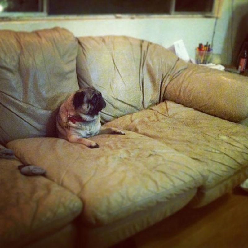 lazy-dogs-sofas3