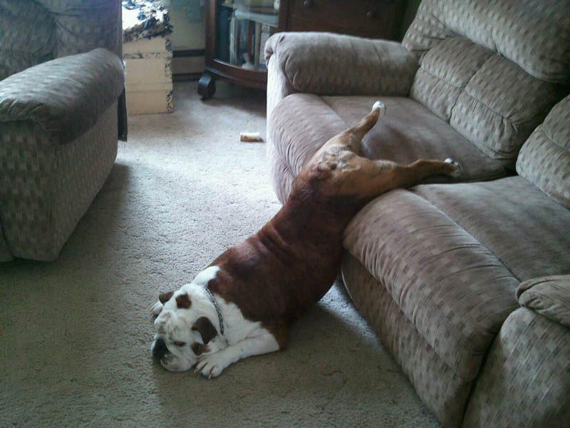 lazy-dogs-sofas4