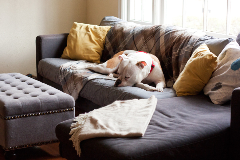 Best Sofa For Dogs New 28 Sofa For Dogs Liloe Beds 25 Best