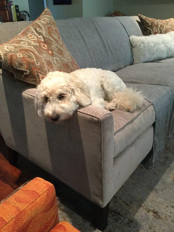 lazy-dogs-sofas7