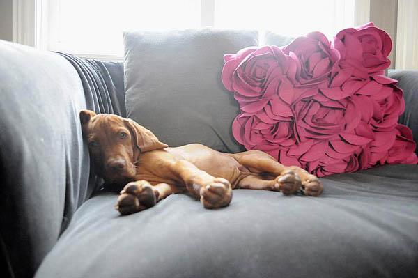 lazy-dogs-sofas8